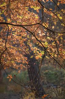 Dogwood Fall Dreams