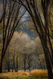 El Capitan Meadow, Fall