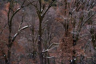 El Capitan Meadow Winter