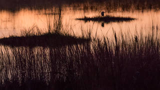 Everglades Twilight