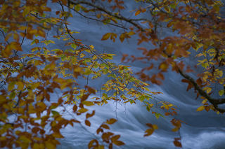 Oconaluftee River, Fall 2