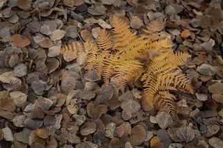 Fern & Aspen Leaves