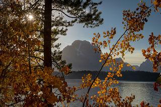 Aspens Jackson Lake