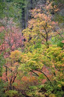 Snake River Cyn Fall Colors 1