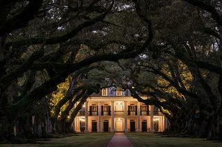 Oak Tree Tunnel, Twilight