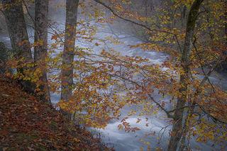 Oconaluftee River, Fall 1