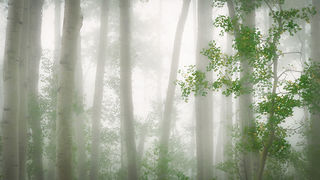 Owl Creek Fog & Aspens