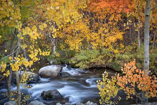 Fall Colors S Bishop Creek