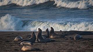 Elephant Seals & Beach