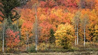 Snake River Cyn Fall Colors 3