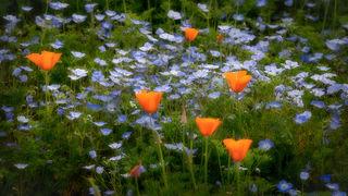 Spring Wildflowers 2