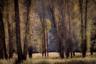 Tetons Meadow, Fall