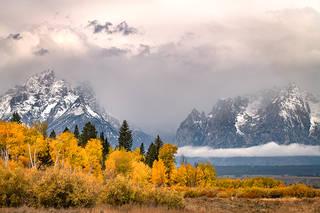 Fall Aspens and Tetons