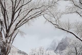 Cottonwood Winter