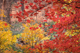 Emerald Pool Maples
