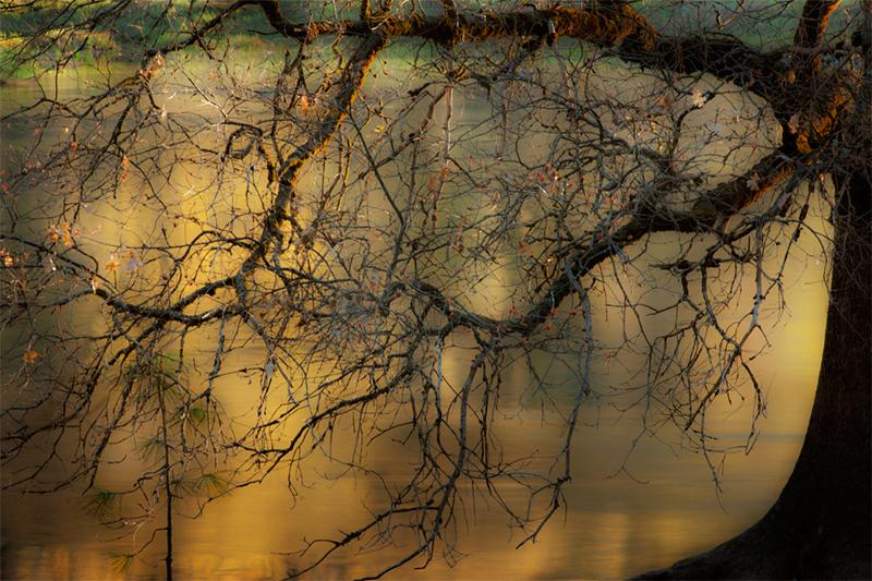 merced river, merced, yosemite, valley, mountains, sierra, trees, sunrise, light, black oak, fall, ca, california, photo