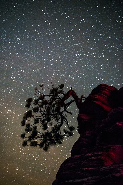 trees, fall, fall color, zion, mountains, utah, ut, southwest, bonsai, pine, stars, milky way, photo