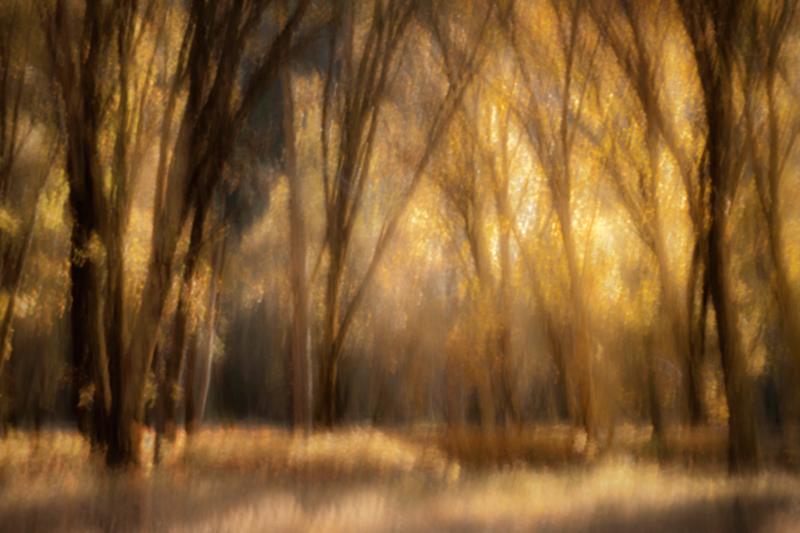 valley, trees, black oaks, yosemite, trees, plants, mountains, sierra, movement, impressions, fall,ca, california, photo
