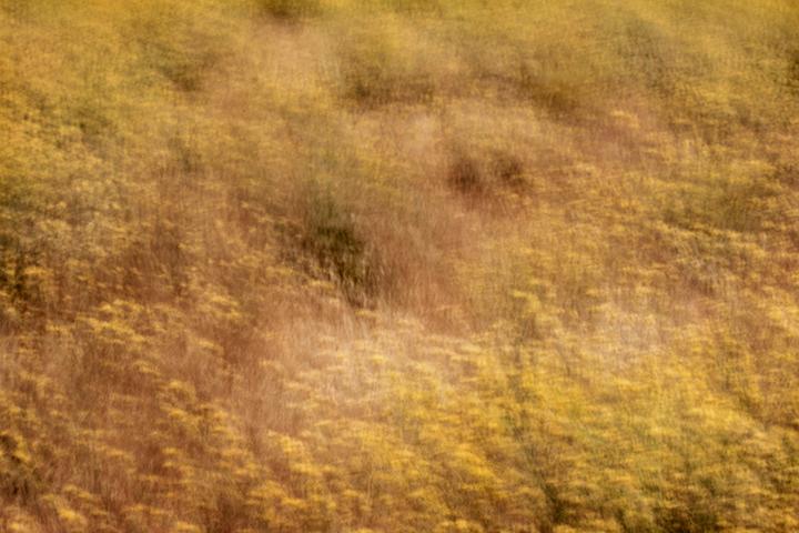 california, yosemite, grasses, plants, flora, impressions, movement, gold country, northern california, ca, california, photo