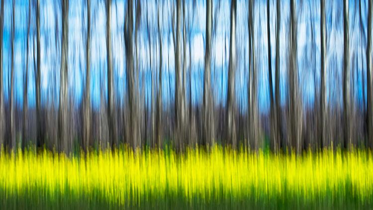 mustard, field, california, movement, impressions, flora, plants, grasses, trees, northern california, ca, california, photo