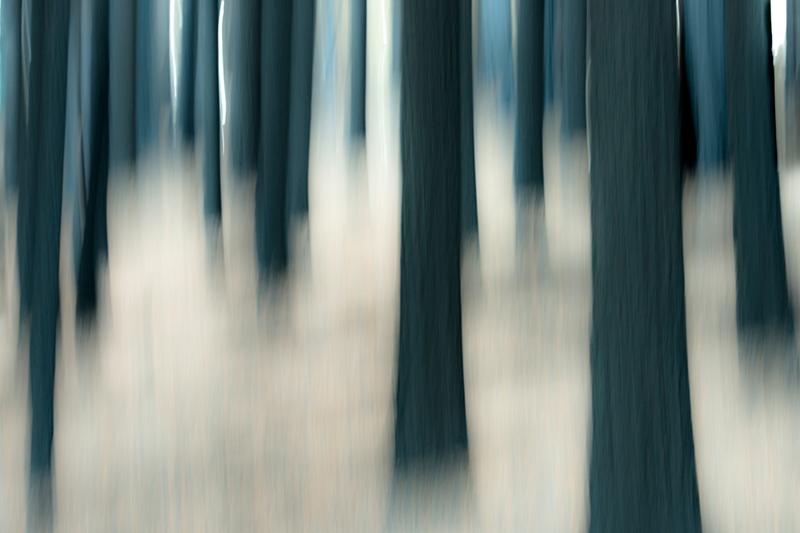 valley, trees, woods, black oaks, yosemite, trees, plants, mountains, sierra, movement, impressions, winter, fire, ca, california, photo