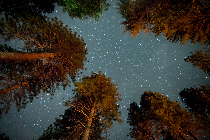 Stars, milky, way, pines, upper,  yosemite, valley, fall, sierra, mountains, ca, california, trees, night skies, photo