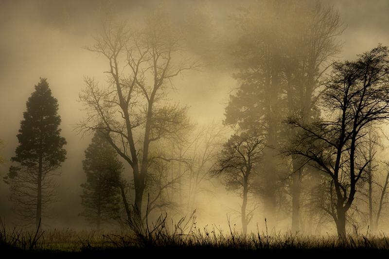 yosemite falls, fog, water, valley, spring, mountains, sierra, trees, waterfalls, ca, california, photo