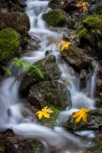 San Francisco Bay, San Francisco, California, CA, water, Mt Tamalpais, bay area,  golden gate, cataract trail, cataract creek, fall, color, photo