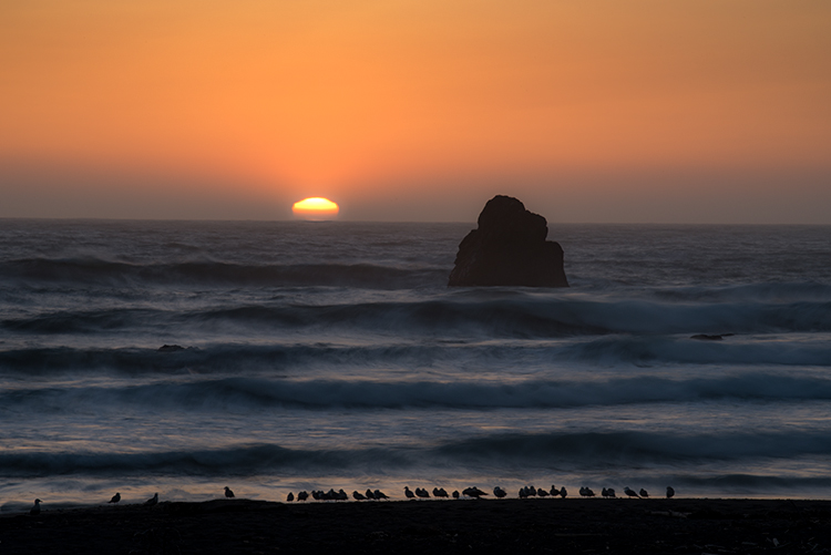 crescent city, california, ca, sunset, redwood national park, redwoods, water, pacific ocean, northern california, n ca, birds, sea stacks, photo