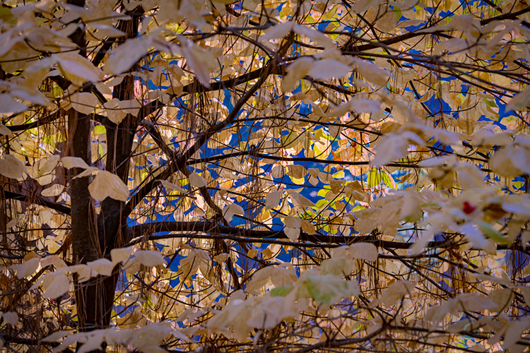 yosemite, national park, sierra, valley, fall, trees, merced, flora, mountains, leaves, ca, colors, dogwoods, photo