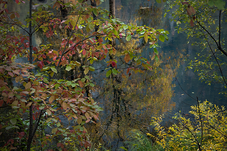Yosemite, Sierra, mountains, yosemite valley, fall, fall color, fall, dogwoods,  wildlife, flora, merced river, merced, water, photo