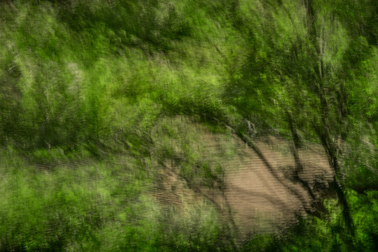 impressions, trees, maples, movement, motion, photo