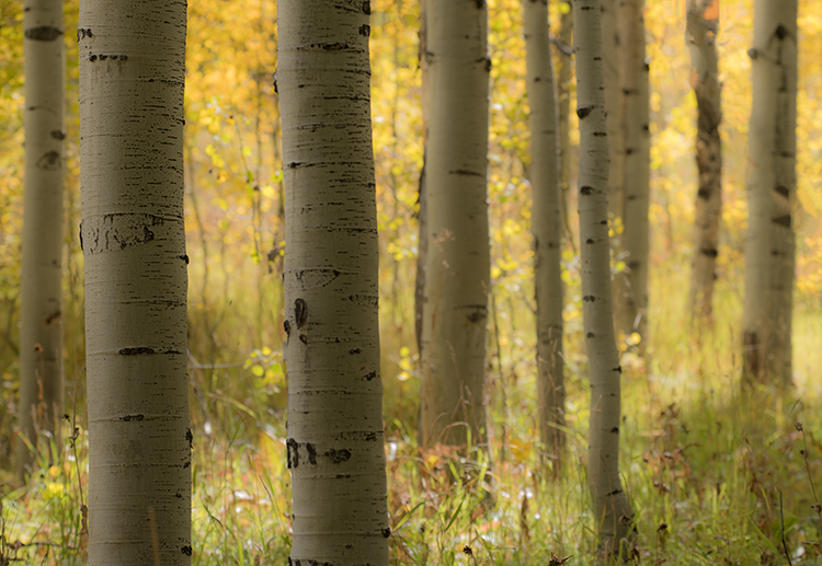 Rocky Mountains, San Juan mountains, rockies, san juans, fall, autumn, color, trees, aspen, pine, fir, colorado, co, owl creek, fog, photo