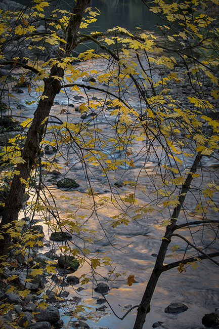 yosemite, national park, sierra, valley, fall, trees, merced, flora, mountains, leaves, ca, colors, dogwoods, merced river, merced, maples, reflections, el capitan, photo