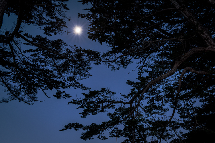 point reyes, seashore, national park, ca, west marin, marin, west, trees, cypress, tree tunnel, sunrise, moonset, moon, photo