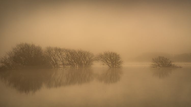 California, ca, water, fog, atmospherics, birds, ducks sunrise, gilroy, rain, photo