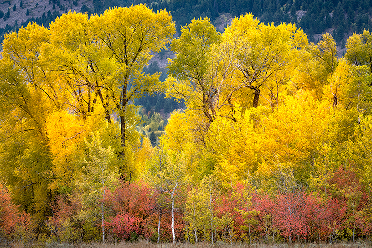 grand teton national park, tetons, snake river, snake, river, mountains, trees, water, color, aspens, clouds, meadows, fall, autumn, colors, cottonwoods, snake river, snake river canyon, maples, photo