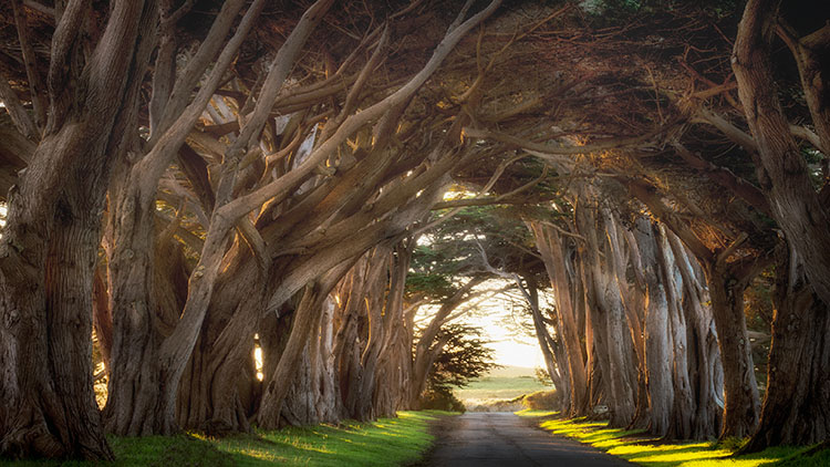 point reyes, seashore, national park, ca, west marin, marin, west, trees, cypress, tree tunnel, sunrise, photo