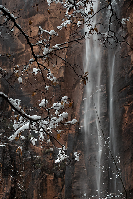 Zion, Zion National Park, ut, utah, red rock, trees, fall, colorado plateau, southwest, mountains, sandstone, zion canyon, weeping rock, cottonwood, trees, water, waterfall, winter, snow, weeping rock, photo