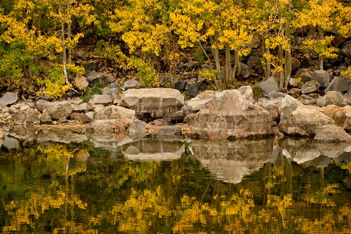 aspendell, aspens, fall, pond, sierra, eastern sierra, ca, california, trees, water, photo