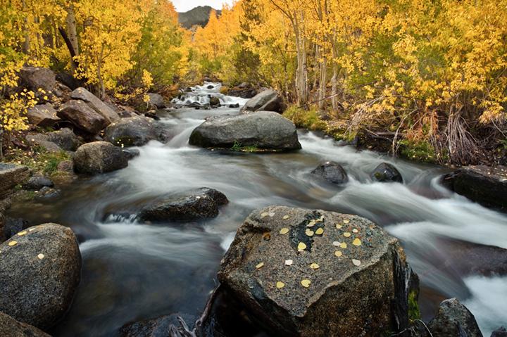 eastern sierra, sierra, aspens,  bishop creek, South fork, fall, ca, california, trees, water, mountains, photo