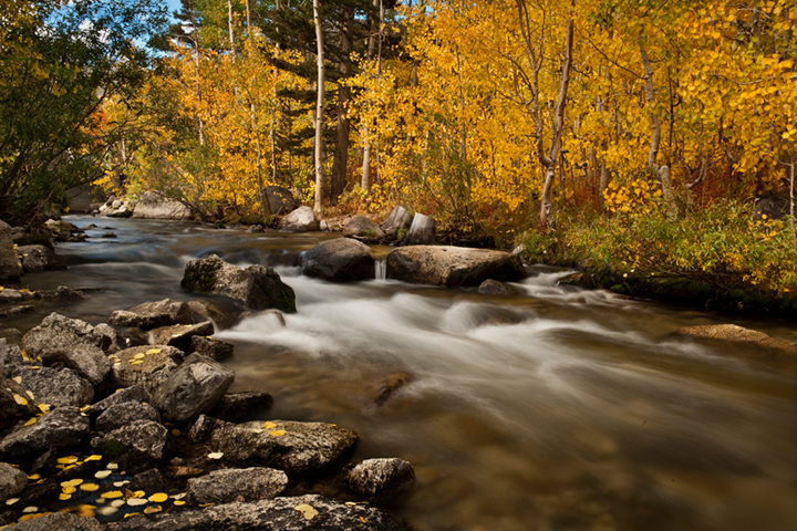eastern sierra, sierra, aspens,  bishop creek, north fork, fall, ca, california, trees, water, photo