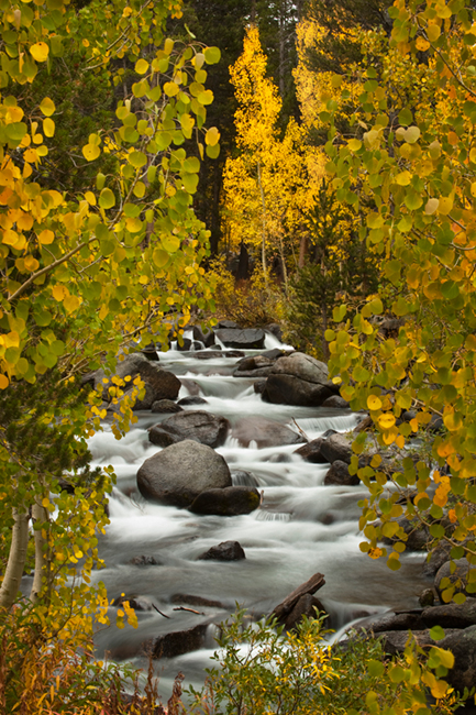 eastern sierra, sierra, aspens,  bishop creek, South fork, fall, ca, california, trees, water, mountains, photo