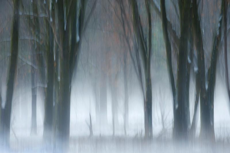 valley, trees, black oaks, yosemite, trees, plants, mountains, sierra, movement, impressions, fog, winter, ca, california, photo