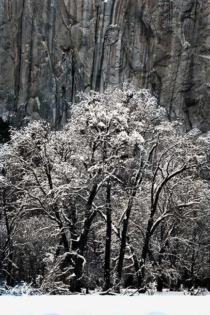 black oaks, black, oaks, fog, yosemite, ca, california, sierra, mountains, water, el capitan, meadow, trees, winter, snow, landscape, atmospherics, , photo