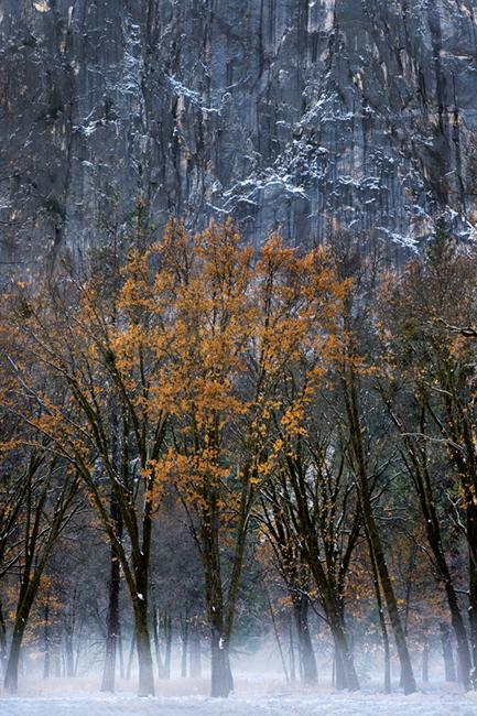 black oaks, black, oaks, fog, yosemite, ca, california, sierra, mountains, water, el capitan, meadow, trees, winter, snow, landscape, atmospherics, , photo