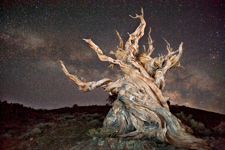 bristlecone, pines, big pine, ca, california, bristlecone pine reserve, forest, sierra, eastern, trees, sunset, milky way, stars, schulman grove, owens river valley, owens river, photo
