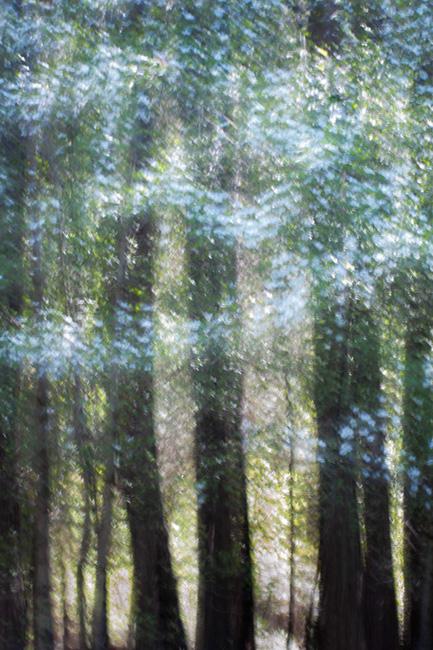 yosemite, mountains, sierra,  impressions, movement, northern california, california, dogwood, trees, spring, ca, california, photo