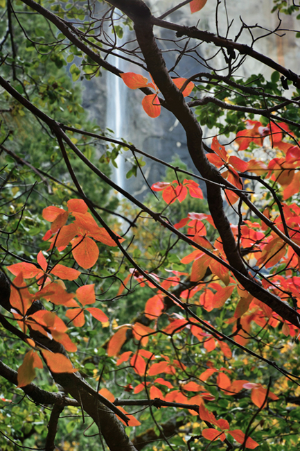 dogwoods, trees, bridalveil, water, waterfall, valley view, ca, calorfrnia, fall, fall color, photo