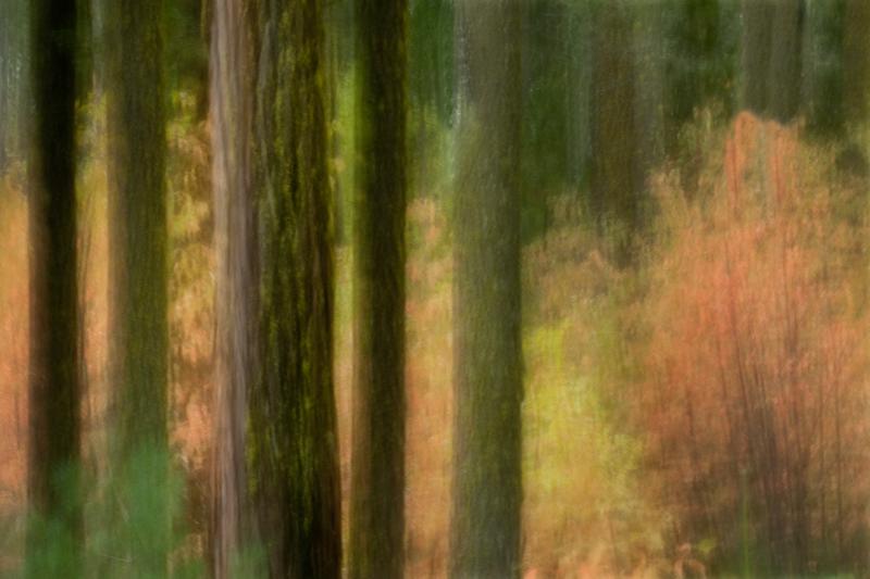 valley, trees, blur, reflections, snow, yosemite, movement, impressions, california, mountains, sierra, photo